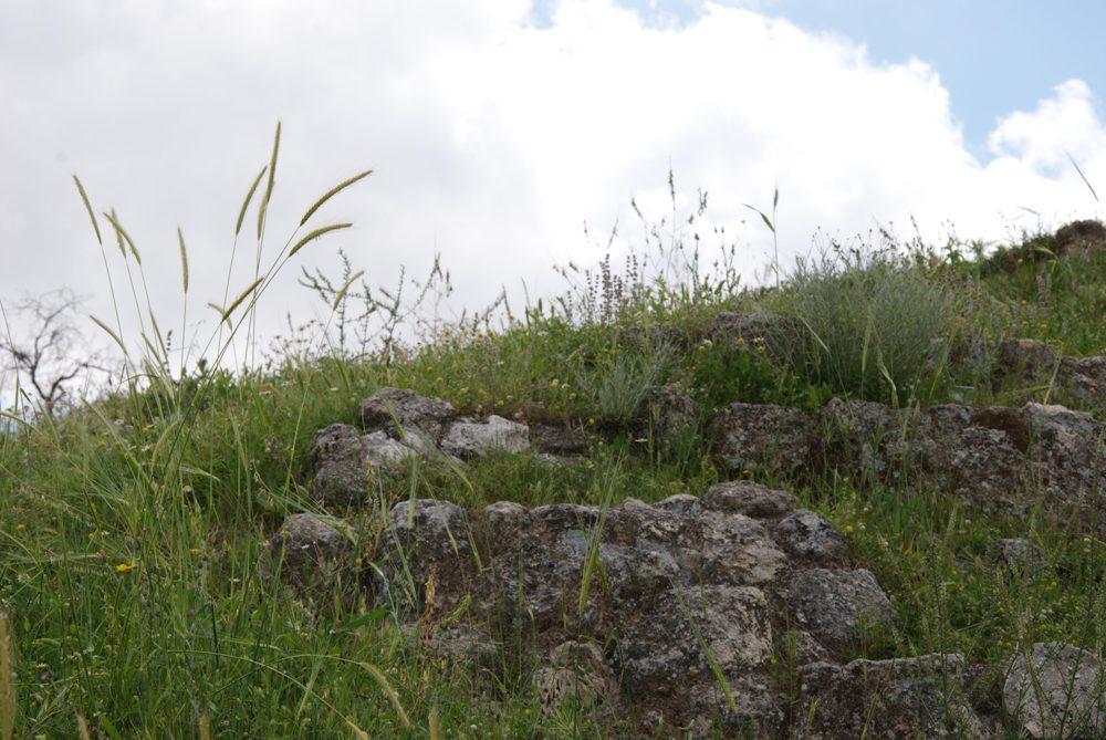 Природа Святой Земли - развалины древей столицы Израиля