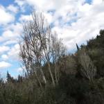 Лес и небо - Нахаль аШофет