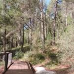 Лес в Холмах Менаше