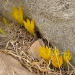 Хелмониет в Иудейской пустыне