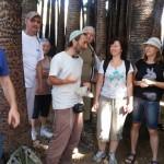 Эйн Мата - в плантации пальм Вашингтония