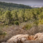 В горах Иерусалима - вид на Бейт Шемеш