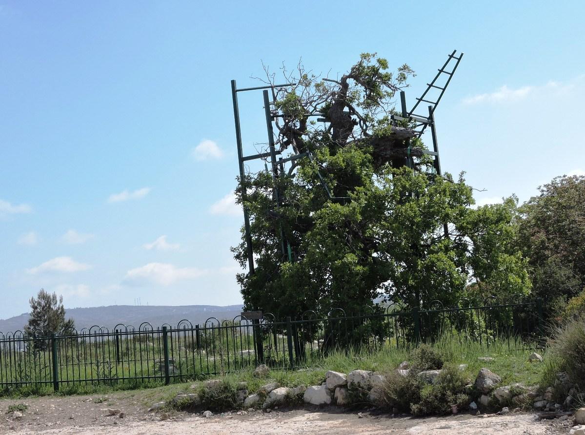Лестница Яакова к северу от поселения Бейт Эль