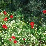 Цветение на севере Израиля