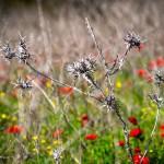 Цветение в Изреельской долине