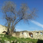 Дир а-Шейх в Иерусалимских горах