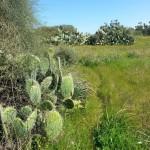Маршрут в парке Реим, Западный Негев - экскурсия Цветущая пустыня