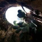 Внутри водосборника Византийского периода - экскурсия Цветущая пустыня