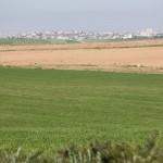 Вид в сторону Газы и Сажаии, экскурсия в Западном Негеве - Цветущая пустыня