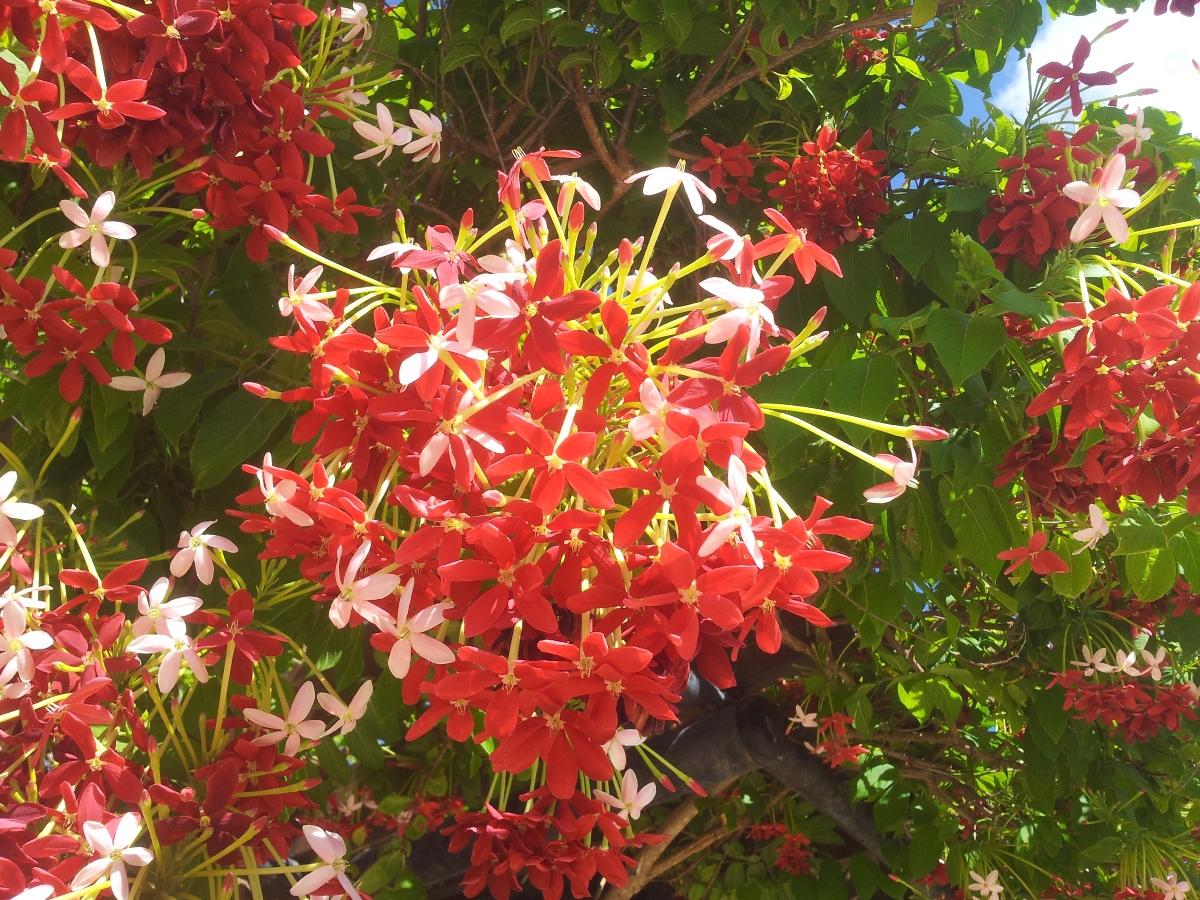 Цветение Тель-Авива