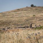 Хурват Омрит у подножия горы Хермон