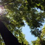 В лесу в ущелье Мирон - Амуд под Цфатом, Верхняя Галилея