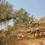 Бейт Эль - шомера, руины сторожевой башни