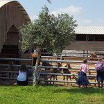 На фермах Итамара - Гивот Олам