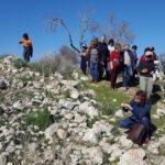 Начало цветения в Иудейской низменности