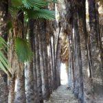Плантация пальм, Эйн Мата
