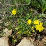 Цветы в горах Иерусалима