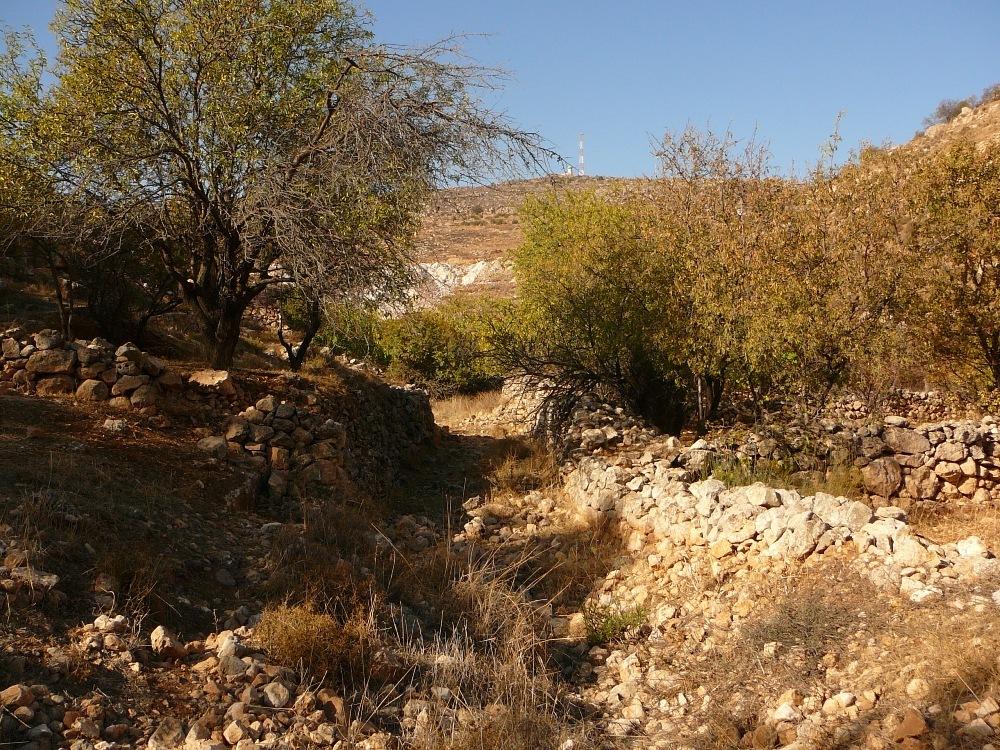 Ландшафт Земли Израиля