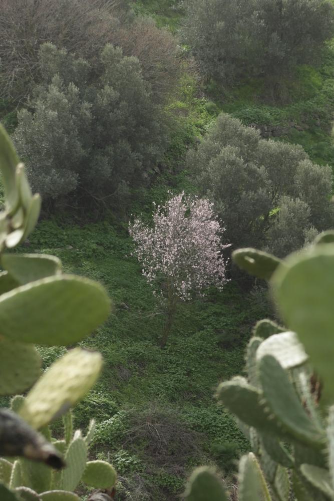 Озеро Кинерет - Галилейское море