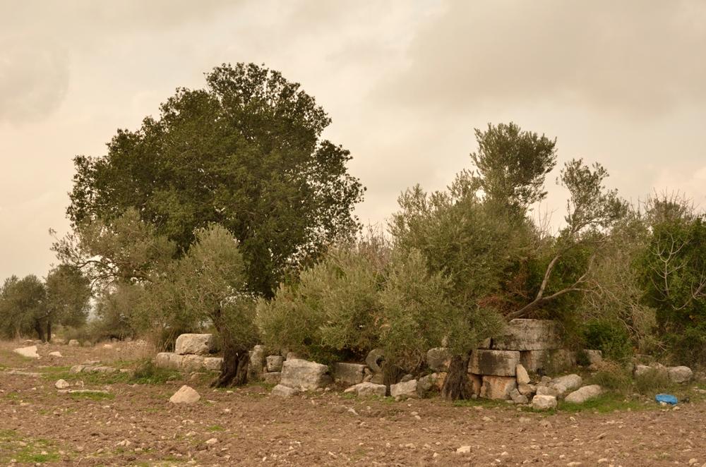 Руины общественных зданий в Хирбет Самара в Шомроне