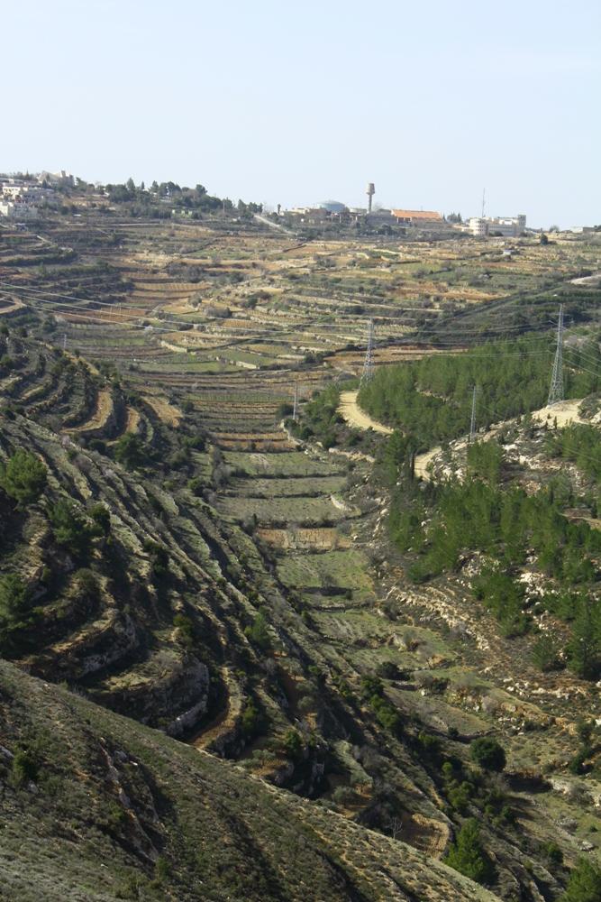 Террасы в Иудейских горах - с дороги Праотцов