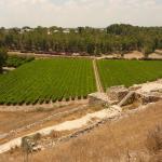 Долина а-Эла – место битвы Давида и Голиафа.