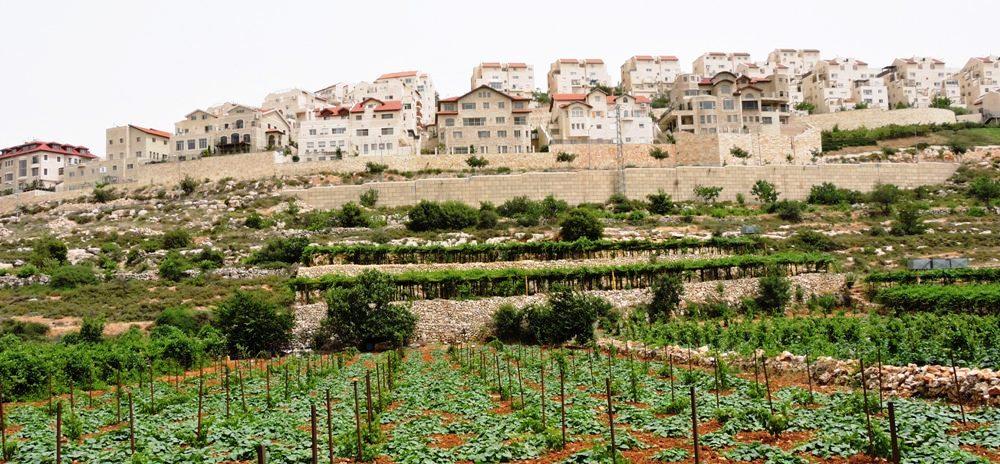 Огороды, виноградники и дома