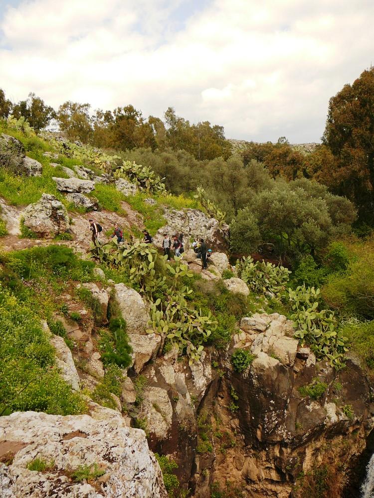 Скалы, оливковые деревья и сабрес - путешествие по ущелью Джелабун