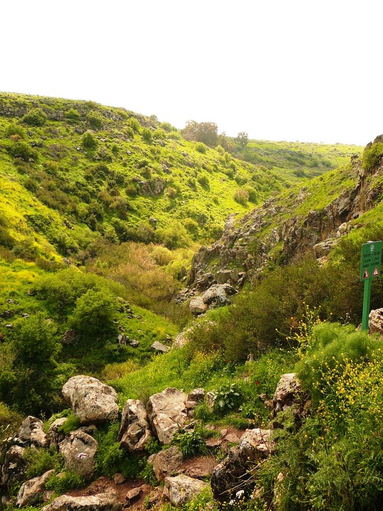 Вид на ущелье Двора - черный базальт утопает в море зелени