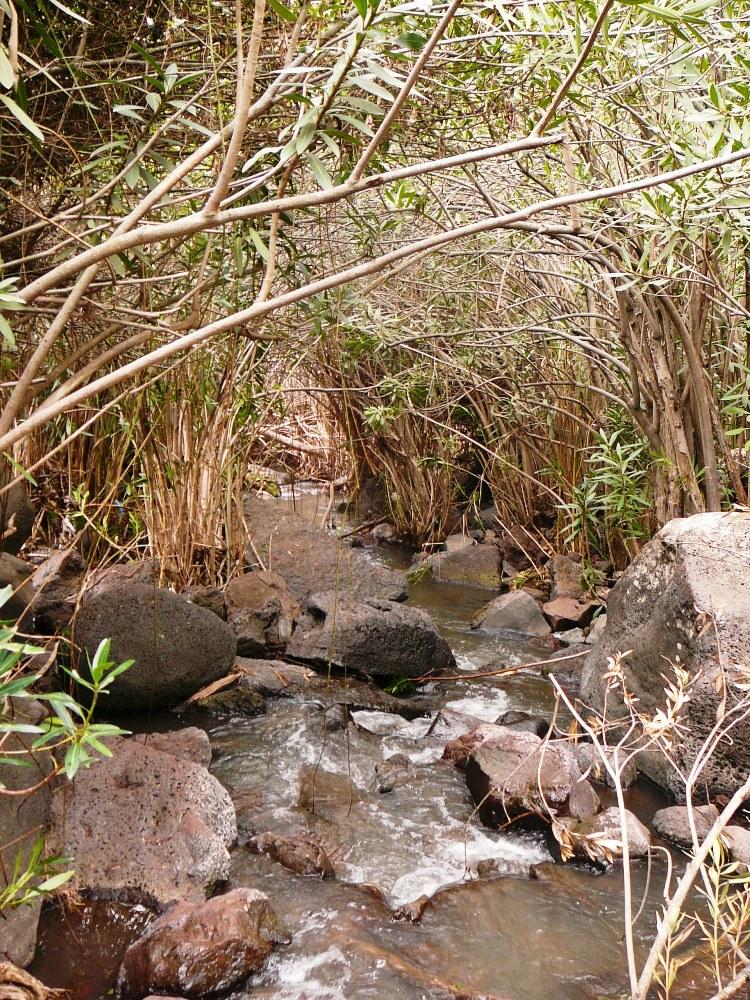 Поток воды в зарослях олеандры (ардуфа) - русло ручья Двора (Джелабун)
