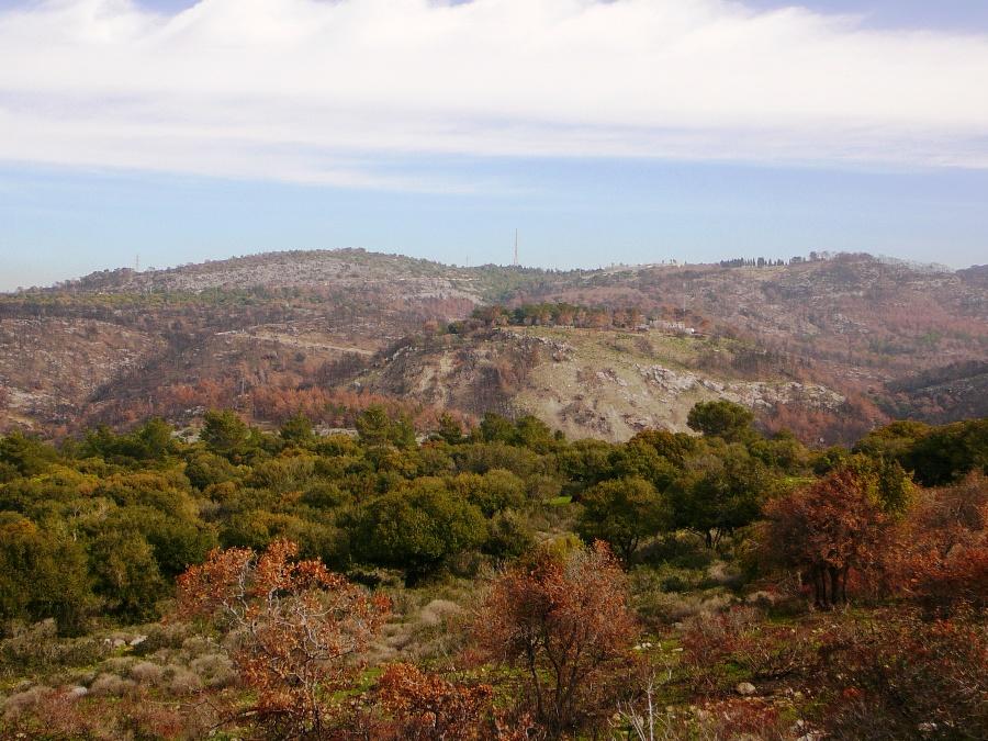 Гора Кармель - разноцветные краски после пожара