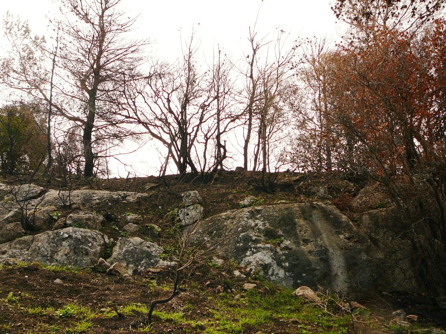 Гора Кармель - новая трава на месте пожара