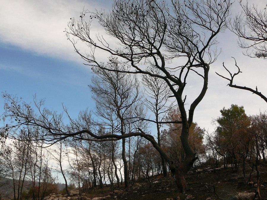 В заколдованном лесу - на горе Кармель