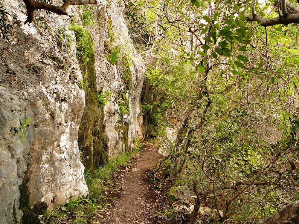 Пешая тропа на горе Кармель - здесь леса не пострадали при пожаре